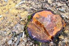 Onwettige ontbossing, vernietiging van aard, globale catastrofe, het probleem van ecologie stock afbeeldingen