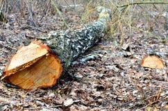 Onwettige ontbossing, vernietiging van aard, globale catastrofe, het probleem van ecologie royalty-vrije stock fotografie