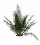 Onychiopsis prehistoric fern - 3D render royalty free illustration