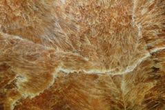 onyx меда стоковое изображение