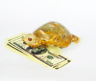 Onyx lucky turtle on a pack of dollars isolate. Big Onyx turtle siting on a pack of dollars on isolated white background Royalty Free Stock Photo