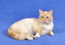Onze favoriete kat! ! stock foto's