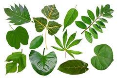 Onze tipos da coleção tropical da folha Imagens de Stock Royalty Free
