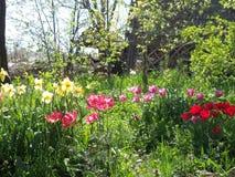 Onze tuin in de zonneschijn van de de lentemiddag royalty-vrije stock foto's