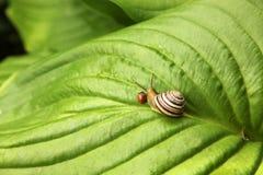 Onzelieveheersbeestje en slak stock afbeelding