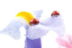 Onzelieveheersbeestje op bloem Stock Foto's