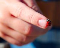 Onzelieveheersbeestje op een hand Royalty-vrije Stock Foto