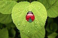 Onzelieveheersbeestje op groen blad Stock Foto