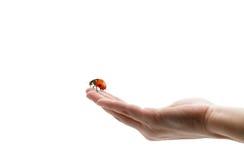 Onzelieveheersbeestje op hand Royalty-vrije Stock Afbeeldingen