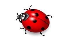 Onzelieveheersbeestje. Vector illustratie van lieveheersbeestje op wit stock illustratie
