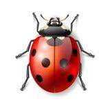 Onzelieveheersbeestje vectorillustratie Stock Afbeelding