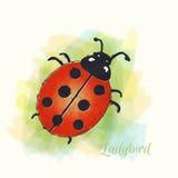 Onzelieveheersbeestje watercolour Royalty-vrije Stock Fotografie