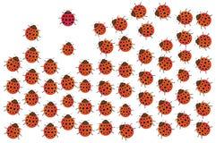 Onzelieveheersbeestjes Royalty-vrije Stock Afbeelding