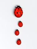 Onzelieveheersbeestjes in een verticale rij Stock Foto's