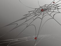 Onzelieveheersbeestjes op spinneweb stock foto's