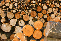 Oodles cut hornbeam logs as firewood Stock Photo