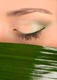 Oog en groen blad Royalty-vrije Stock Afbeelding