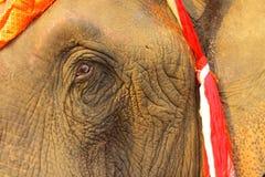 Oog en rimpel, gezicht van olifant Royalty-vrije Stock Foto's