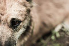 Oog van alleen hond. Stock Foto's