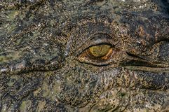 Oog van de krokodil in het Nationale Park van Kakadu in Australia& x27; s Noordelijk Grondgebied royalty-vrije stock foto's
