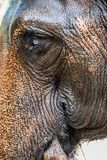 Oog van de Olifant Stock Afbeeldingen