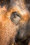 Oog van de Olifant Stock Foto's