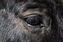 Oog van de zwarte paardclose-up - Beeld stock afbeeldingen