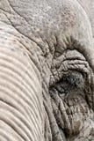 Oog van een olifant Royalty-vrije Stock Fotografie