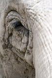 Oog van een olifant Stock Foto's