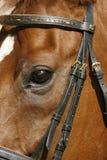 Oog van een paard Royalty-vrije Stock Foto
