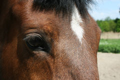Oog van een paard Stock Afbeeldingen