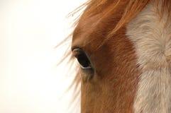 Oog van het paard Stock Afbeeldingen
