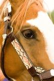 Oog van paard royalty-vrije stock afbeelding