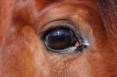 Oog van paard Stock Afbeelding