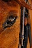 Oog van paard Royalty-vrije Stock Afbeeldingen