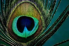 Oog van pauw - detail Stock Foto