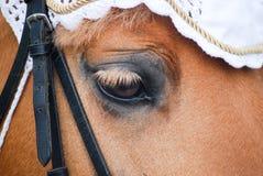 Oog van poney Stock Foto