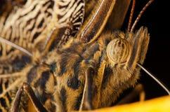 Oog van vlinder Royalty-vrije Stock Afbeeldingen