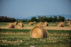 oogst Stock Fotografie