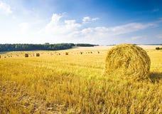 oogst bedrijf Stock Afbeelding