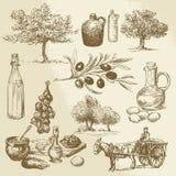 Oogst en olijfproduct stock illustratie