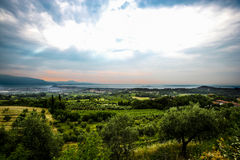 Oogst in Italië Royalty-vrije Stock Foto's