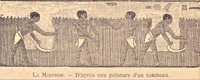 oogst na het schilderen van een graf stock afbeelding