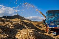 Oogst op Graangebied in Thailand stock afbeeldingen
