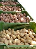 Oogst van aardappel Royalty-vrije Stock Afbeeldingen