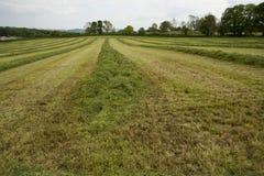 Oogst van gras Stock Afbeelding