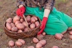 Oogst van groente Royalty-vrije Stock Afbeeldingen