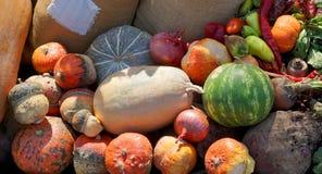 Oogst van groenten royalty-vrije stock foto
