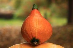 Oogst van oranje pompoenen Halloween Royalty-vrije Stock Foto