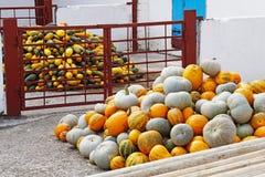 Oogst van pompoenen en pompoen Stock Afbeeldingen